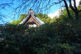安国論寺 キンモクセイと本堂
