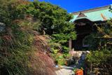 鎌倉妙法寺 ススキと本堂