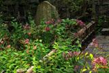 鎌倉久成寺 杜鵑草と長尾定景の墓
