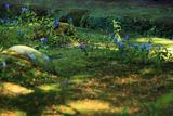 海蔵寺 散り金木犀と竜胆