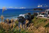 七里ガ浜のススキと江の島
