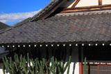 光照寺のサボテン