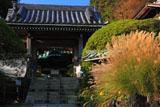 鎌倉安養院のススキと山門