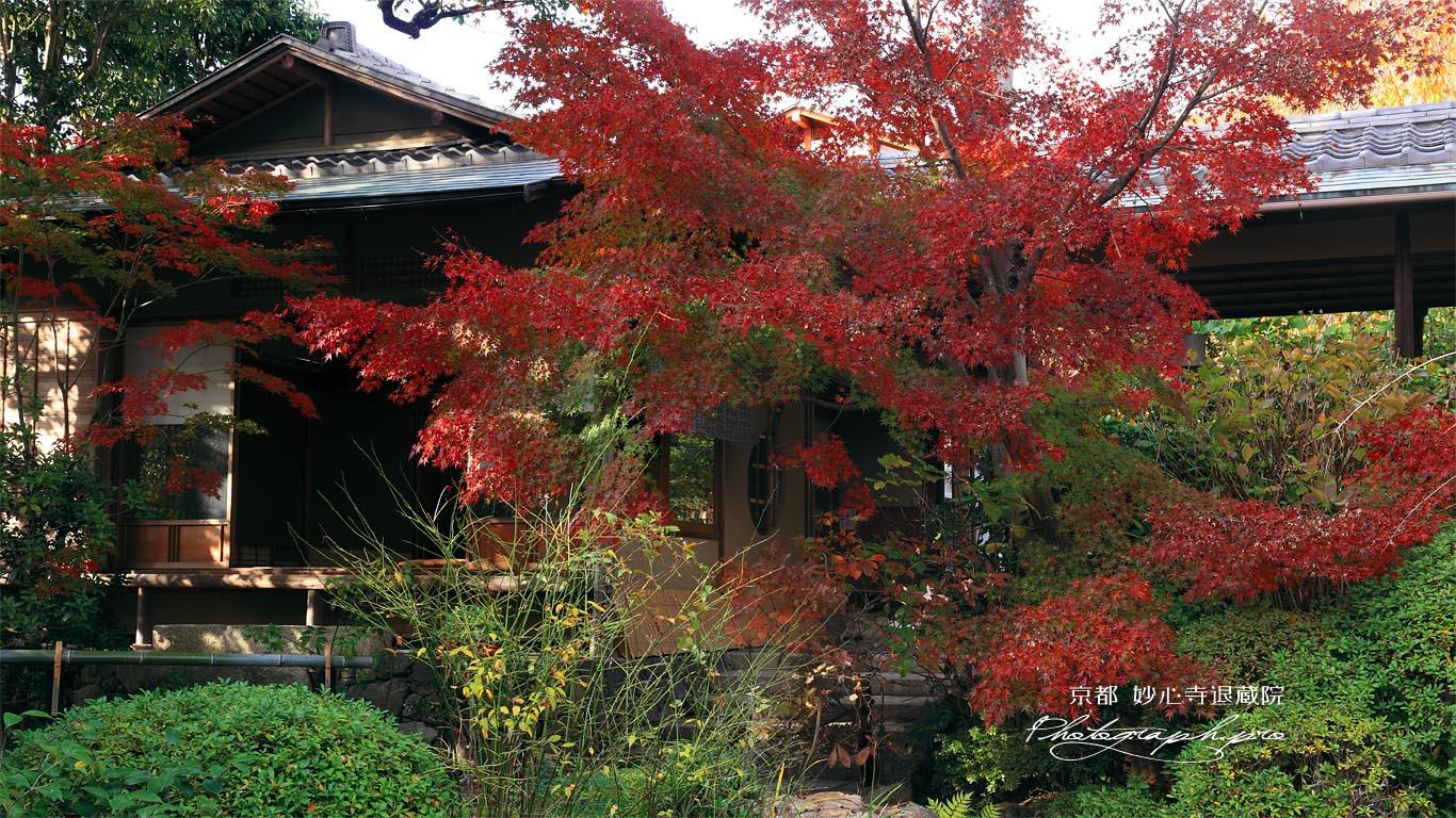 妙心寺退蔵院 紅葉と大休庵 壁紙