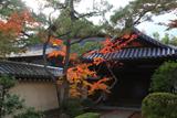 妙心寺霊雲院 紅葉と大玄関