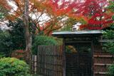妙心寺大法院墓所の紅葉