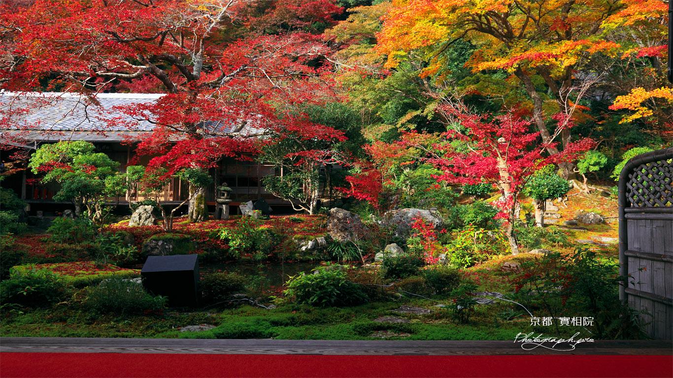 実相院 紅葉の山水庭園と書院 壁紙