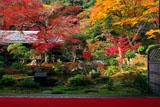 実相院 紅葉の山水庭園と書院