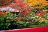 実相院 紅葉の池泉回遊式庭園