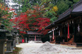 京都石座神社 紅葉と東西本殿