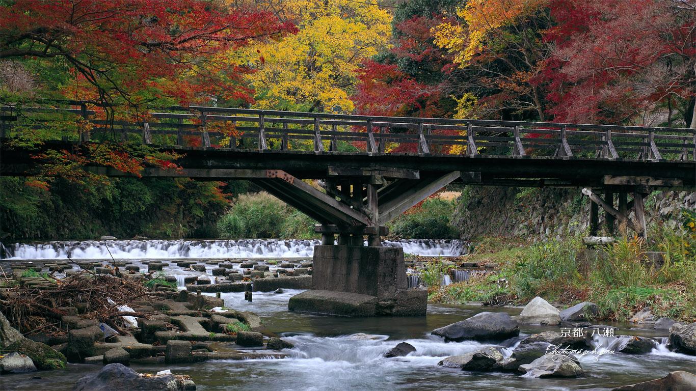 京都八瀬 紅葉の八瀬川 壁紙