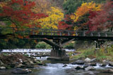京都八瀬 紅葉の八瀬川