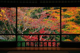 瑠璃光院書院からの紅葉