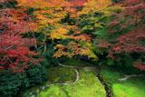 瑠璃光院 瑠璃の庭の紅葉