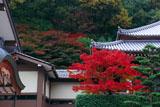京都八瀬 養福寺の紅葉