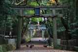 崇道神社 参道のサル