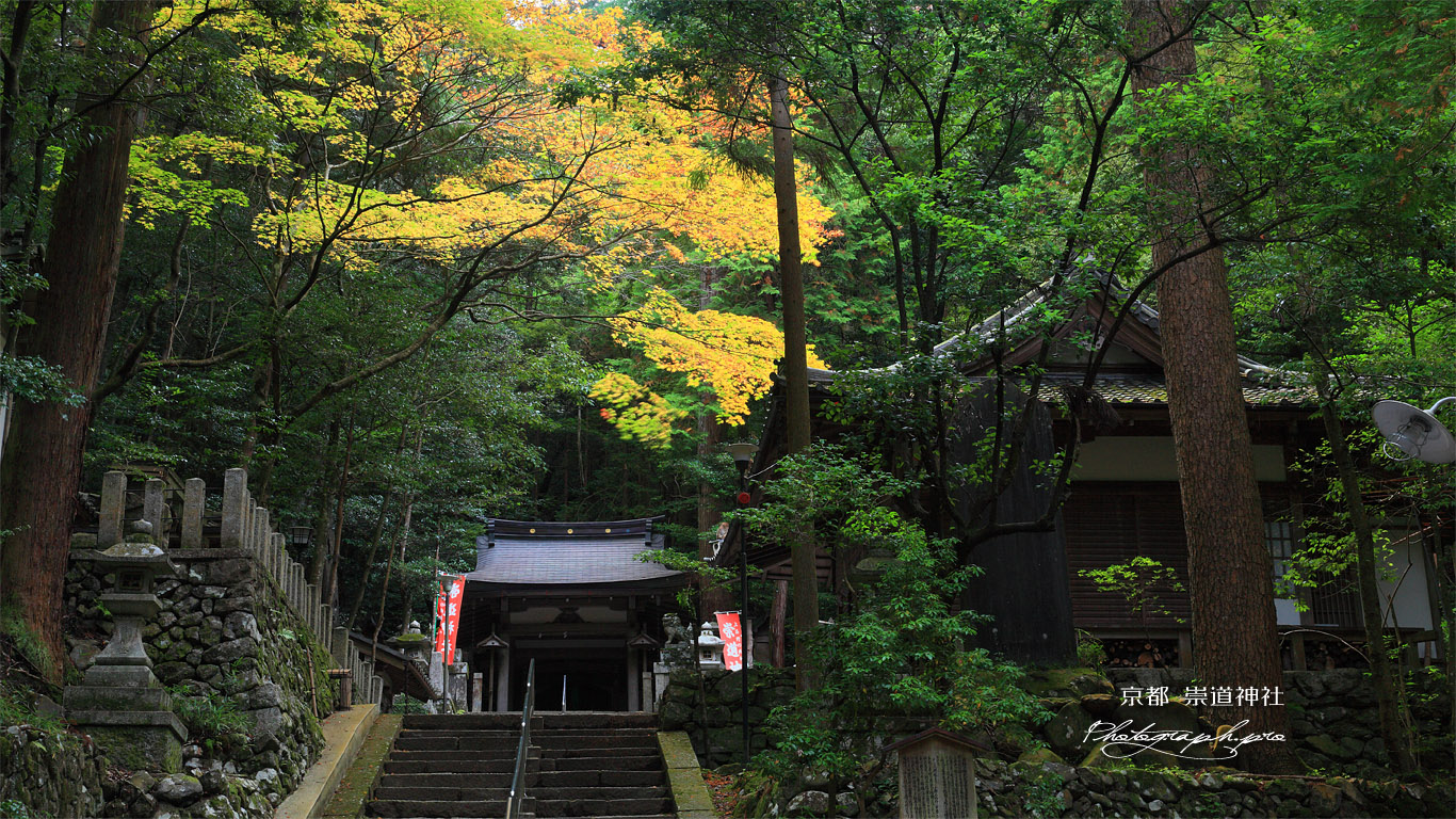 崇道神社 社殿と紅葉 壁紙