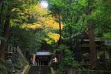 崇道神社 社殿と紅葉
