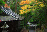 崇道神社 社務所と紅葉