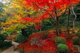 詩仙堂の散り紅葉