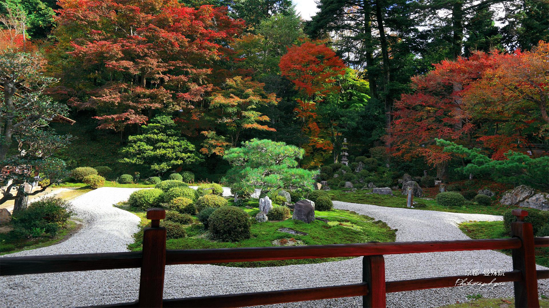 曼殊院 紅葉の庭園