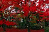 紅葉の庭園と将軍塚大日堂