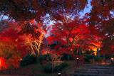 将軍塚庭園ライトアップ