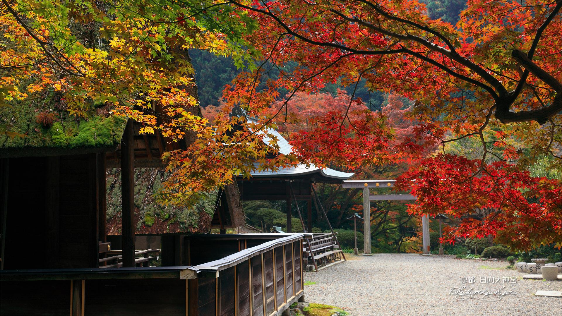日向大神宮 三色紅葉越しの外宮