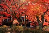 真如堂本堂前の紅葉