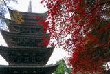 醍醐寺五重の塔