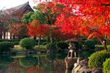 東寺庭園の紅葉