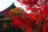 東寺講堂と紅葉