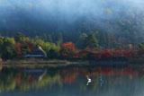 広沢池 サギと紅葉の平安郷
