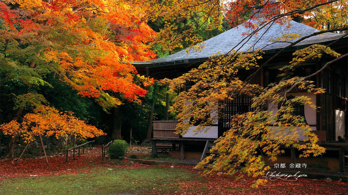 京都金蔵寺 紅葉の護摩堂 壁紙