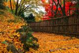 京都金蔵寺 銀杏の落葉