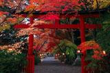 大原野神社三の鳥居と参道の紅葉