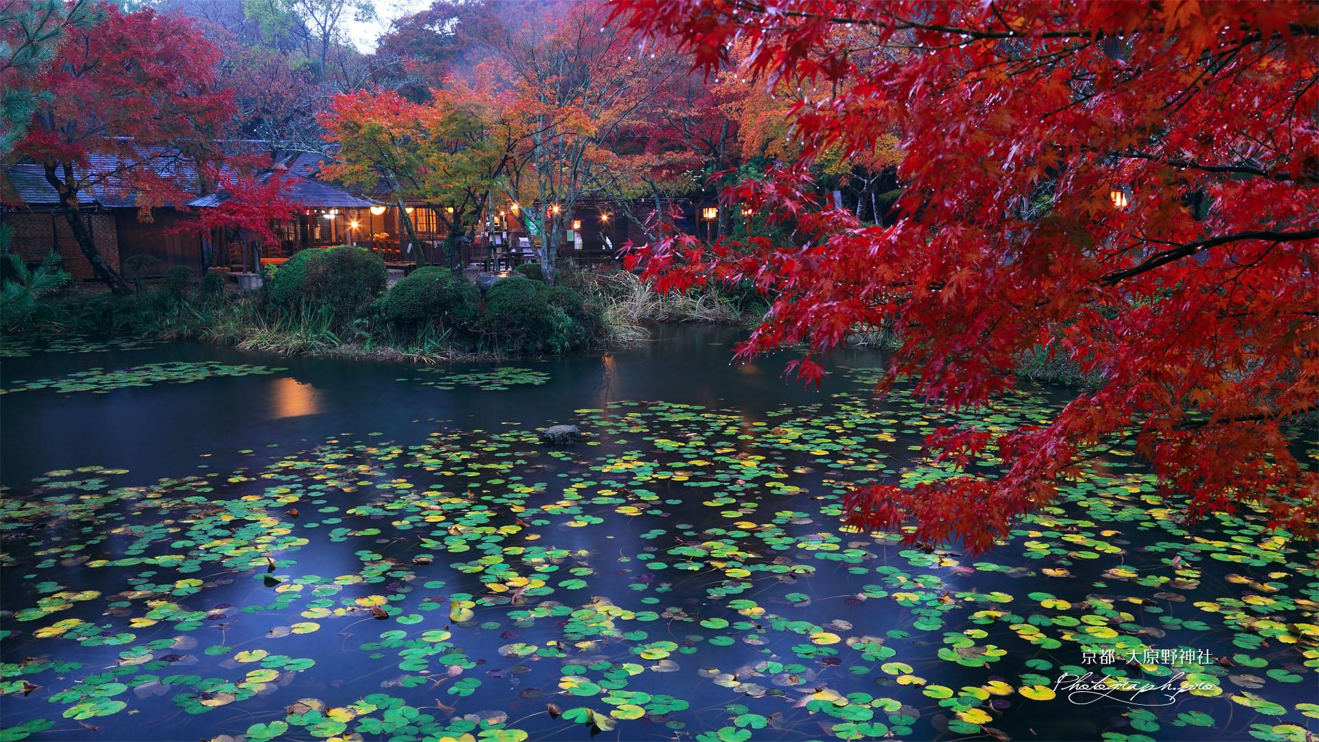 大原野神社鯉沢の池の紅葉
