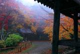 京都金蔵寺 霧の境内