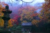 京都金蔵寺 石燈籠と紅葉の山内