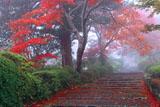 霧に覆われた善峯寺