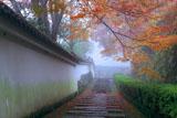 霧の善峯寺阿弥陀堂