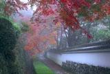 紅葉と白塀