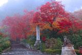 善峰寺奥の院への路