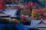 向かいの山からの善峯寺
