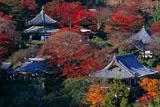 善峯寺の紅葉の伽藍