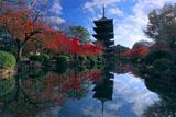 東寺五重塔と紅葉