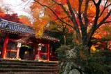 京都金蔵寺 紅葉の仁王門