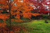 宝厳院 散紅葉と書院