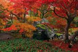 宝厳院 紅葉と碧岩