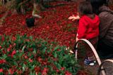 宝厳院 母子と敷紅葉